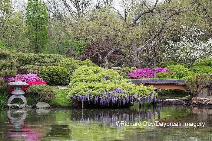 65021-03618 Japanese Garden in spring,  Missouri Botanical Garden, St Louis, MO