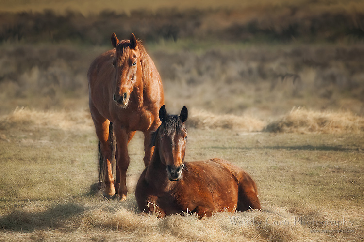 Two horses, one standing one laying down, near their morning feeding station, as if guarding their position