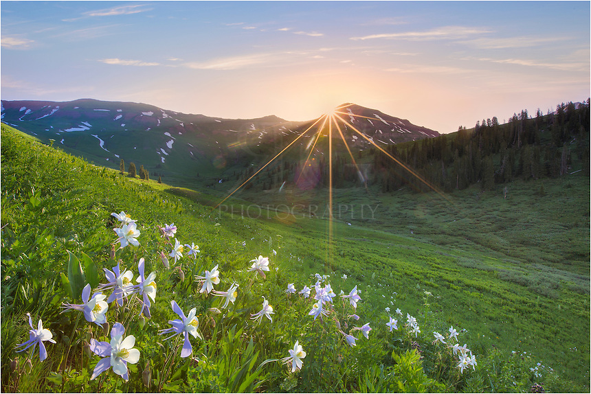 On the trailhead to West Maroon Pass, I had to pause at sunrise to capture this Colorado wildflower image featuring the state flower, the Columbine, and Crested Butte's Mount Bellevue. In a few weeks, this field will be filled with colorful flowers, but for this hike I was happy with the Columbine. I love capturing landscapes like this in the Rocky Mountains. I always feel fortunate to have witnessed such a timeless moment.
