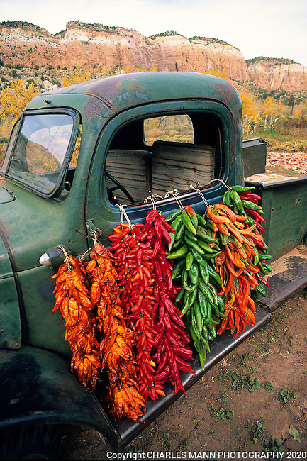 An old green pickup truck comes alive with the colors of autumn when strings of chiles called ristras are hung from the door.