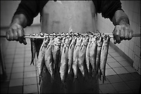 Europe/France/Nord-Pas-de-Calais/59/Nord/Flandre/Grand-Fort-Philippe: A la saurisserie Nathalie Dutriaux - Spécialités de produits fumés de la mer,filets de harengs fumés doux et filets marinés du Nord Pas-de-Calais  & marinades //   France, Nord, Flanders, Grand Fort Philippe, Nathalie Dutriaux At the smoked fish, smoked specialties from the sea, smoked herring fillets marinated fillets of mild and Nord Pas de Calais and marinades