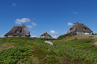Sylt, Germany. Hörnum. Traditional reed roofs.