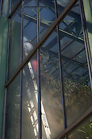 Tropical Rainforest Glasshouse (formerly Le Jardin d'Hiver or Winter Gardens), 1936, René Berger, Jardin des Plantes, Museum National d'Histoire Naturelle, Paris, France.  Low angle view through the windows of the Glasshouse of a man at work on a ladder leaning against the windows lit by the morning light. Behind him the luxuriant vegetation is visible.