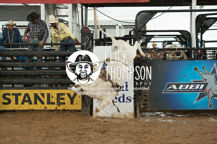 B-J 5 Go Blue of Jason & Amy Bogg/ Bob Whisnant/ The Jaynes Gang during the American Bucking Bull, Incorporated event in Decatur, TX - 6.3.2016. Photo by Christopher Thompson