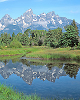 The Grand Tetons reflected in a still beaver pond at Schwabacher's Landing, Grand Teton National Park, Wyoming.