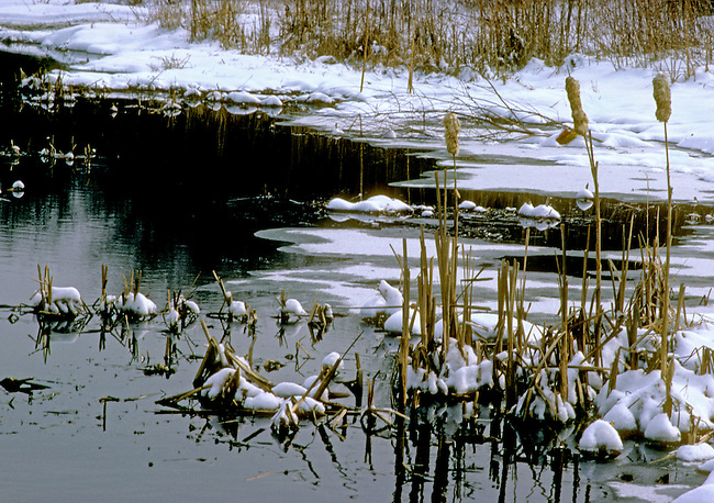 A winter marsh has some open water at Kankakee River State Park, Kankakee County, Illlinois USA