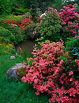Kubota Gardens, Seattle, WA<br /> Rhododendrons and azaleas blooming in a dazzling display of colors surrounding Moon Bridge