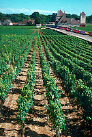 Vineyards at Clos Vougeot winery, Nuits-St. Georges, Rhone River wine region, France