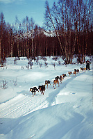 Fur Rendezvous World Championship Sled Dog Race, Anchorage, Alaska