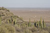Desierto de San Nicolas caracter'stico por los hombre sahuaro, al fondo se arecia las platas productoras de camaron cercanas al lugar