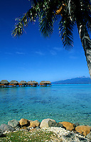 Palm tree on water in Tahiti, French Polynesia,  South Pacific Rim