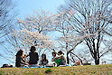 Tokyo, Japan - April 8: People had a Hanami party, or a party under cherry blossoms, in Yoyogi Park, Shibuya, Tokyo, Japan in the fair weather on April 8, 2012.