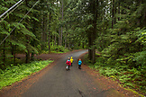 USA, Oregon, Santiam River, Brown Cannon, three young boys walking in the Willamete National Forest on their way to the Santiam River
