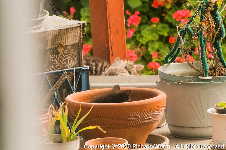 Kittens explore flower pots on a backyard workbench