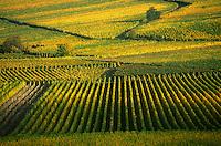 Europe/France/Alsace/68/Haut-Rhin/Eguisheim: le vignoble des Vins d'Alsace Grand Cru