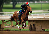 ARCADIA, CA - APRIL 02: Accelerate works out at Santa Anita Park on April 02, 2018 in Arcadia, California. (Photo by Alex Evers/Eclipse Sportswire/Getty Images)