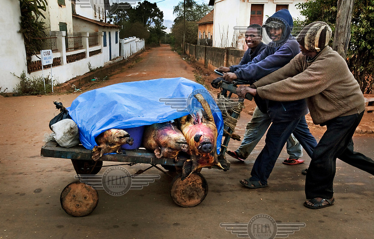 Three men push a cart loaded with slaughtered pigs to market.