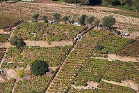 vineyards near quinta da gaivosa douro portugal