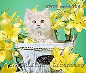 Xavier, ANIMALS, cats, photos, SPCHCATS704,#A# Katzen, gatos