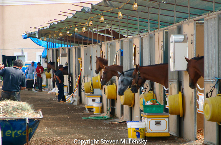 Barn scene at the Del Mar Thoroughbred Club in Del Mar, California