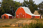 Red barn with red out buildings and outhouse on stream bank with trees, Nebraska.