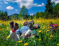 Paar mit Bergwanderschuhen liegt in einer Blumenwiese | couple with hiking boots lying in a flower meadow