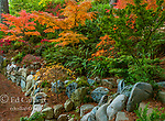Japanese Maple Garden, Fern Canyon Garden, Mill Valley, California