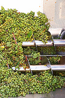 Grape reception hopper. Torres Penedes Catalonia Spain
