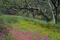 Padres shooting star, johnny-jump-ups and blue oaks<br />