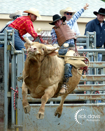 PRCA cowboy Dillon Kujala of Burns, Colorado was unsuccessful riding the Cervi Championship Rodeo Company bull Free Bird, bucking off early during the annual Father's Day rodeo performance June 15, 2008, in Evergreen, Colorado.