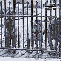 Three similar looking dogs defending a school playground from behind a gate in Chicago.