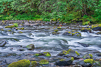 ORCAN_D158 - USA, Oregon, Mount Hood National Forest, Salmon-Huckleberry Wilderness, Lush spring vegetation borders the Salmon River - a federally designated Wild and Scenic River.