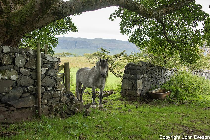A pony on the Isle of Ulva, Scotland.