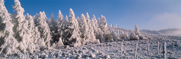 Hoar frost on trees at Simons Pass. Mackenzie Country. Canterbury New Zealand.