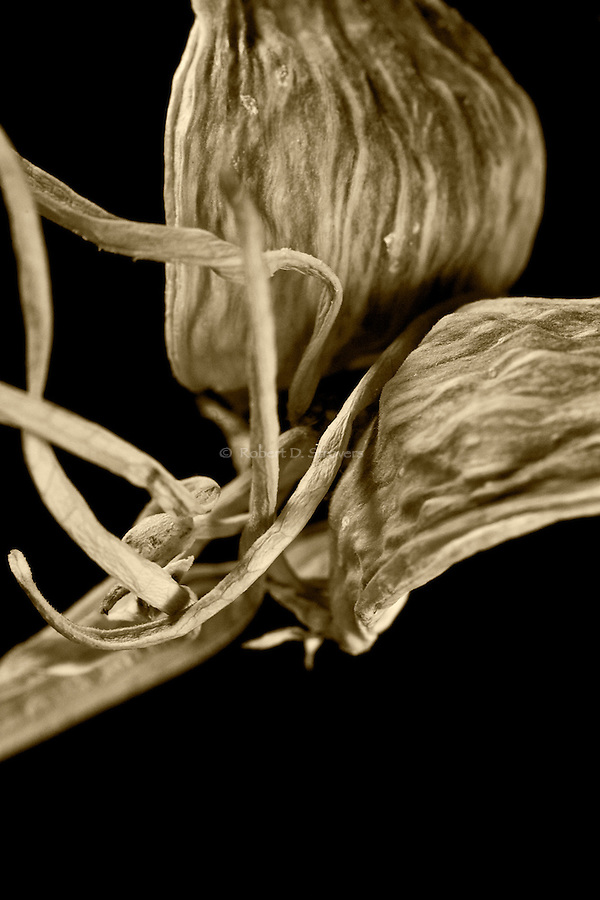 Botanical still life compositions in sepia.