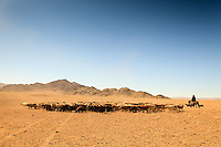 Asia Mongolia, Altai mountain,Saikhsai, mongolian landscape with a Shepper driving his flock