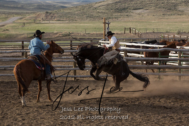 Cutting loose Cowboys working and playing. Cowboy Cowboy Photo Cowboy, Cowboy and Cowgirl photographs of western ranches working with horses and cattle by western cowboy photographer Jess Lee. Photographing ranches big and small in Wyoming,Montana,Idaho,Oregon,Colorado,Nevada,Arizona,Utah,New Mexico.