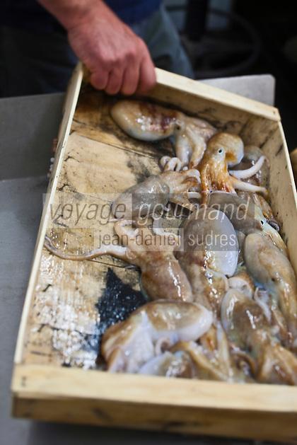 Europe/Italie/Ligurie/Imperia: Poulpes à  la criée du port de pêche d'Imperia
