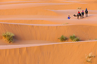 Merzouga, Morocco.  Tourists on Camels Being Led into the Sand Dunes by their Guide.