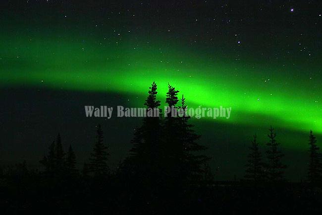 NORTHERN LIGHTS,  'Aurora borealis' CHURCHILL, MANITOBA, CANADA