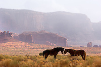 Trail riding horses nuzzle near John Ford's Point at the Monument Valley Navajo Tribal Park in southern Utah, Friday, March 10, 2006. The stunning vistas in the park, stars in many John Ford westerns, are an often-forgotten destination for American travelers. (Kevin Moloney for the New York Times)