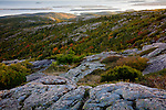 Fall colors the shoulder of Cadillac Mountain in Acadia National Park, Downeast, ME, USA