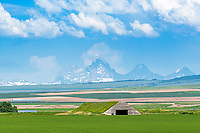 Old sod roof potato cellar east of Rexburg Idaho,  the Grand Tetons towering above.