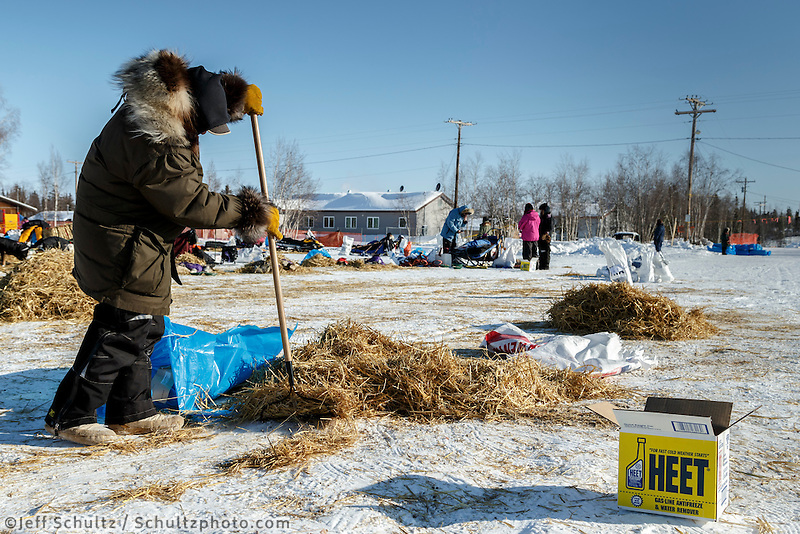 80-something year old George Yaska Sr. volunteers to rake straw in the afternoon at the Huslia checkpoint on Saturday  March 14, 2015 during Iditarod 2015.  <br /> <br /> (C) Jeff Schultz/SchultzPhoto.com - ALL RIGHTS RESERVED<br />  DUPLICATION  PROHIBITED  WITHOUT  PERMISSION