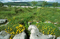 Limestone pavement, Yorkshire Dales, UK