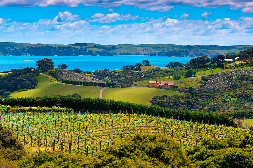 New Zealand Auckland Waiheke Island