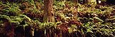 USA, California, old growth redwood trees, Avenue of the Giants, Eureka