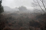 Foggy weather on heathland Shottisham, Suffolk, England