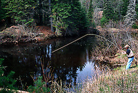 A FLY FISHERMAN SETS HIS HOOK WHILE FISHING ON THE EAST BRANCH OF THE ESCANABA RIVER NEAR GWINN MICHIGAN.