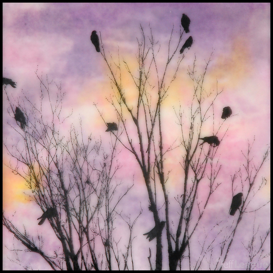 "Mixed media encaustic painting with photography of birds - ""family tree"" in purples,  pinks, and and orange"